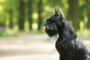 how to handle seizures in pets