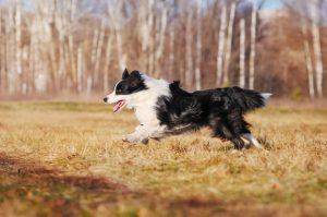 Should You Take Your Dog For A Long Run