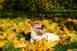 Pet Allergy Care for Fall and Spring