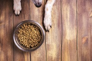 Should Your Dog's Food be Grain Free