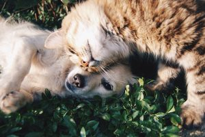 Protecting Your Pet With Pet Insurance
